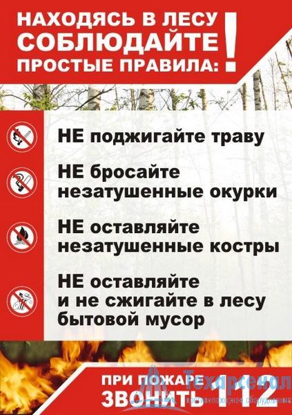 Плакат Правила в лесу